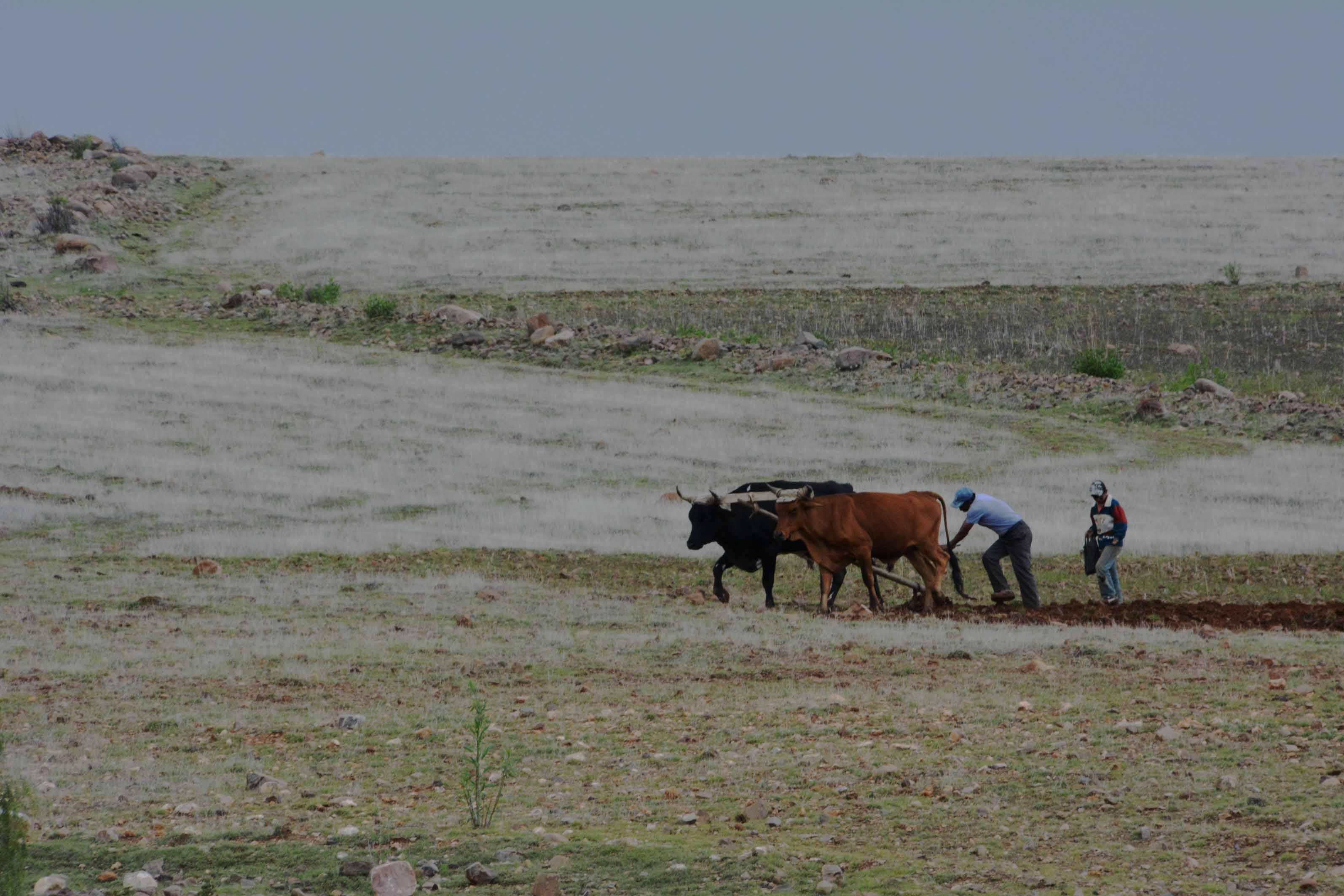 Labour en Bolivie